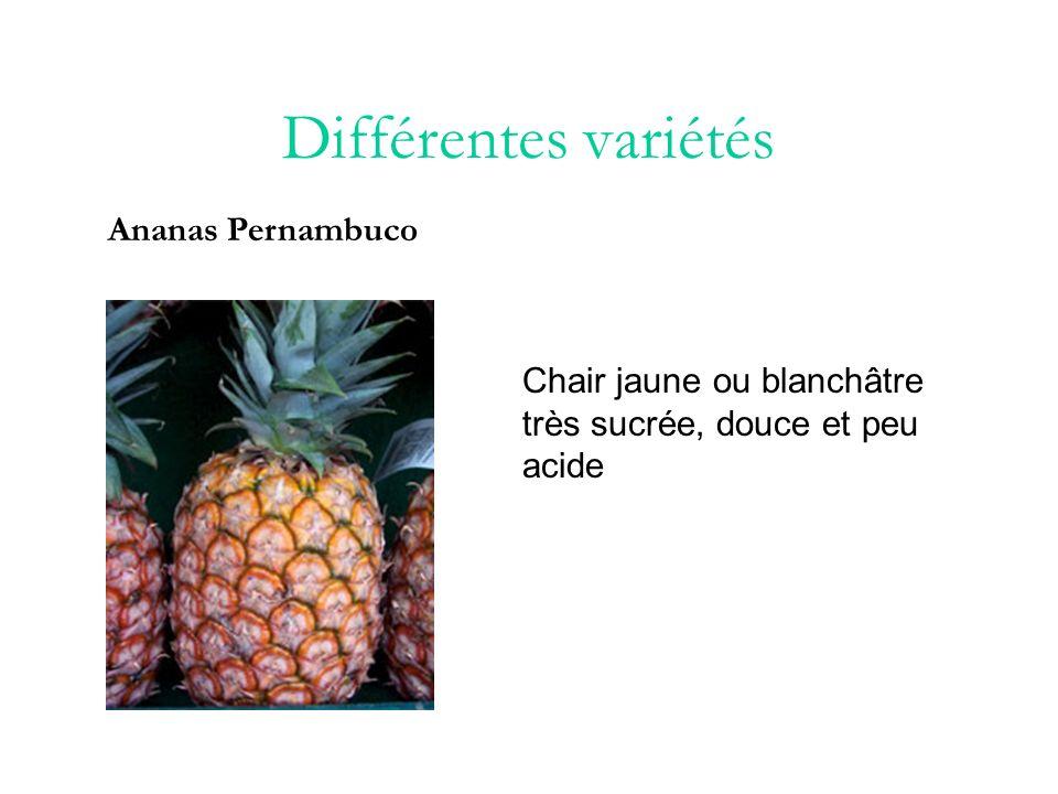 Différentes variétés Ananas Pernambuco
