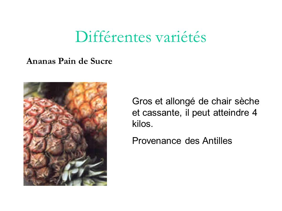Différentes variétés Ananas Pain de Sucre