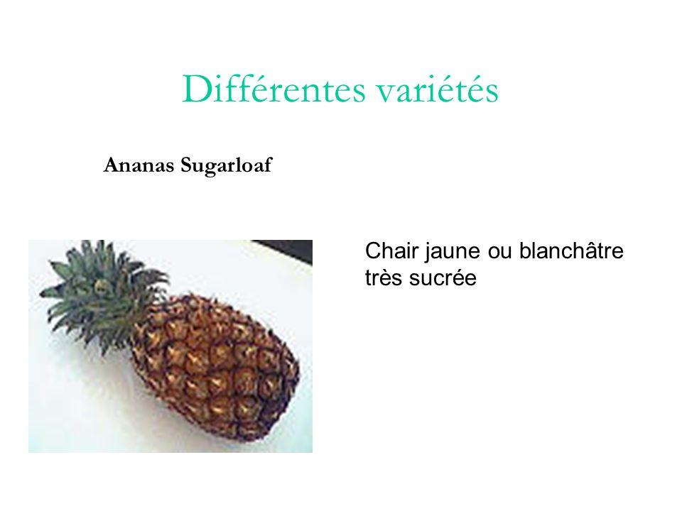 Différentes variétés Ananas Sugarloaf