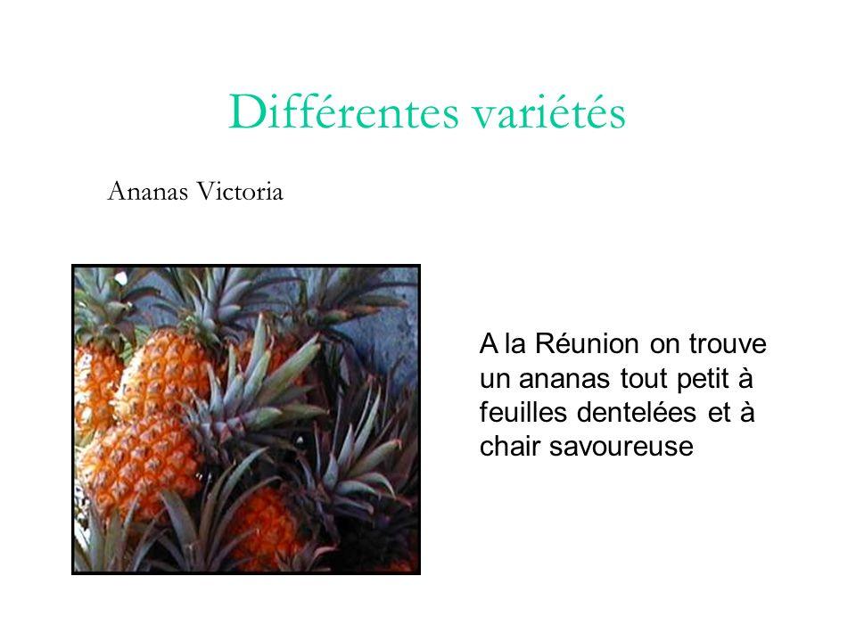 Différentes variétés Ananas Victoria