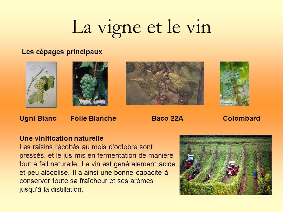 La vigne et le vin Les cépages principaux