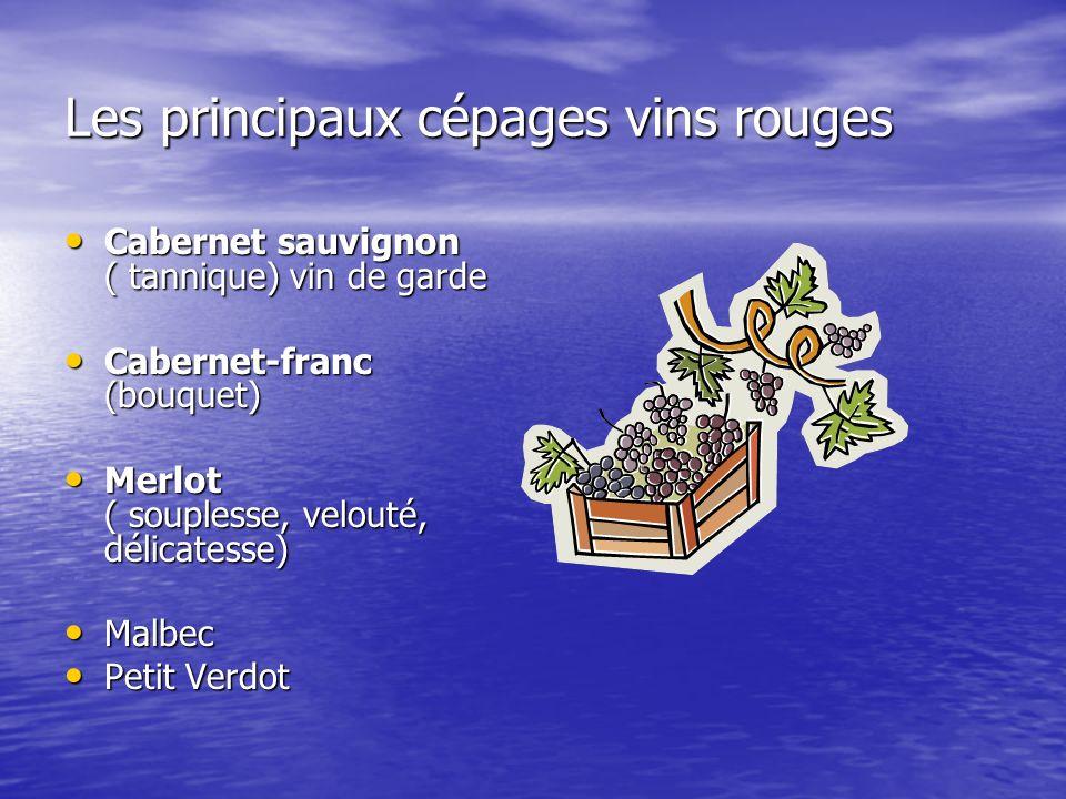 Les principaux cépages vins rouges