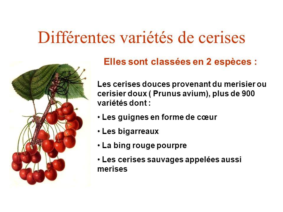 Différentes variétés de cerises