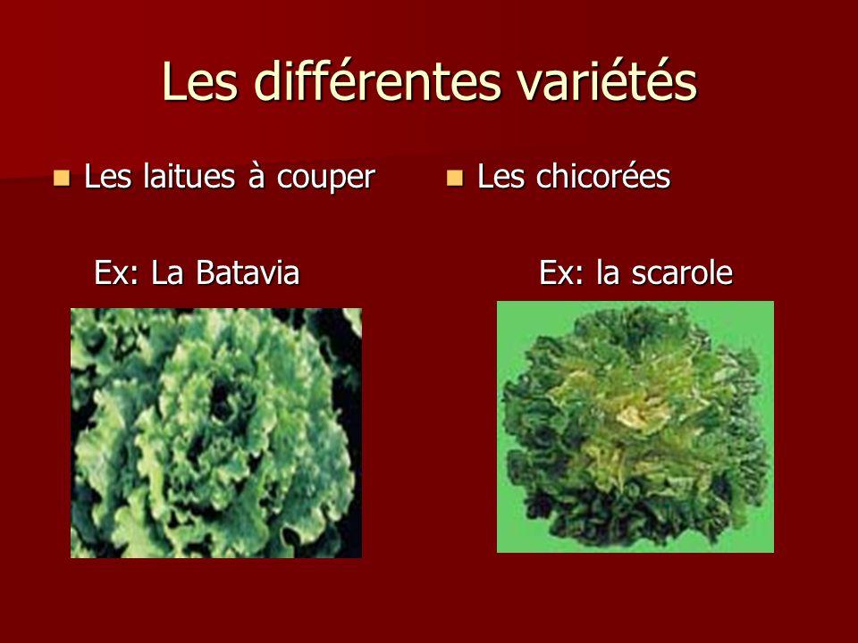 Les différentes variétés
