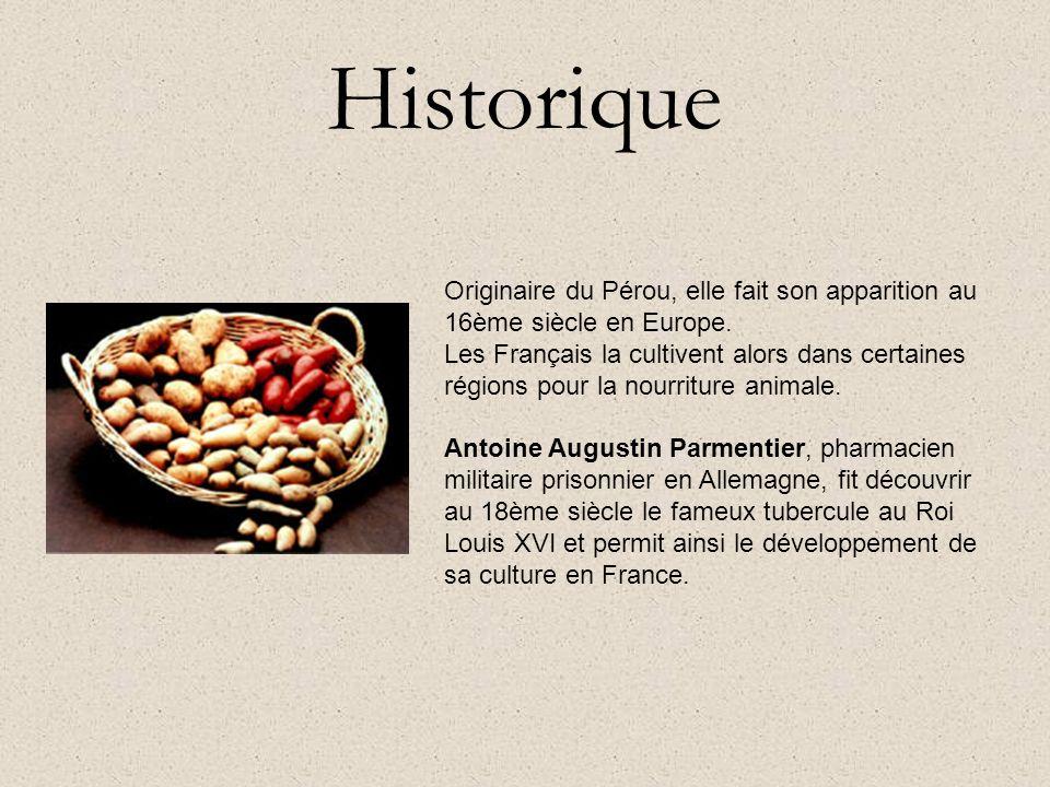 Historique Originaire du Pérou, elle fait son apparition au 16ème siècle en Europe.