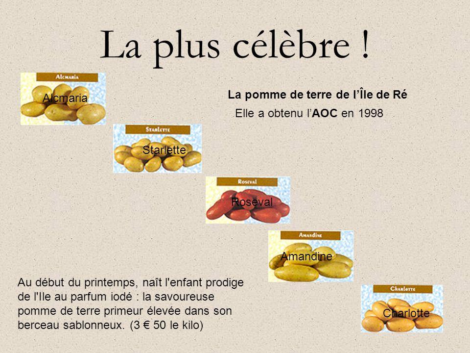 La plus célèbre ! La pomme de terre de l'Île de Ré Alcmaria