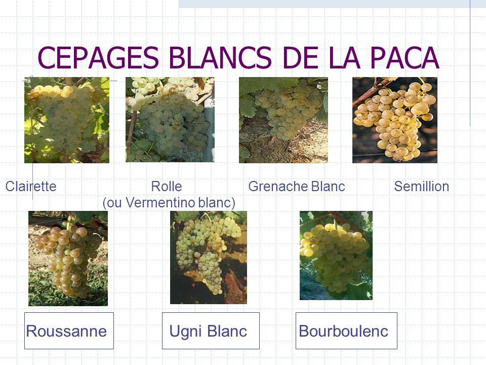CEPAGES BLANCS DE LA PACA
