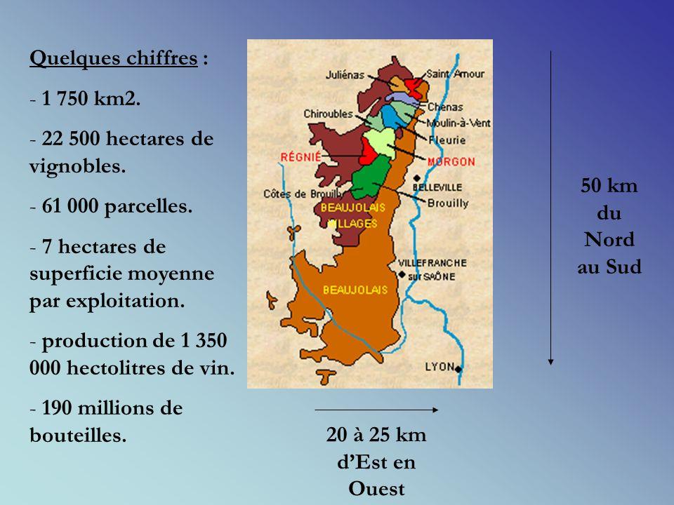 Quelques chiffres : 1 750 km2. 22 500 hectares de vignobles. 61 000 parcelles. 7 hectares de superficie moyenne par exploitation.
