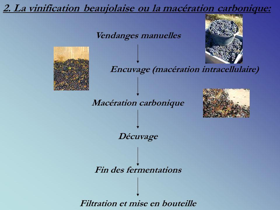 Macération carbonique Filtration et mise en bouteille