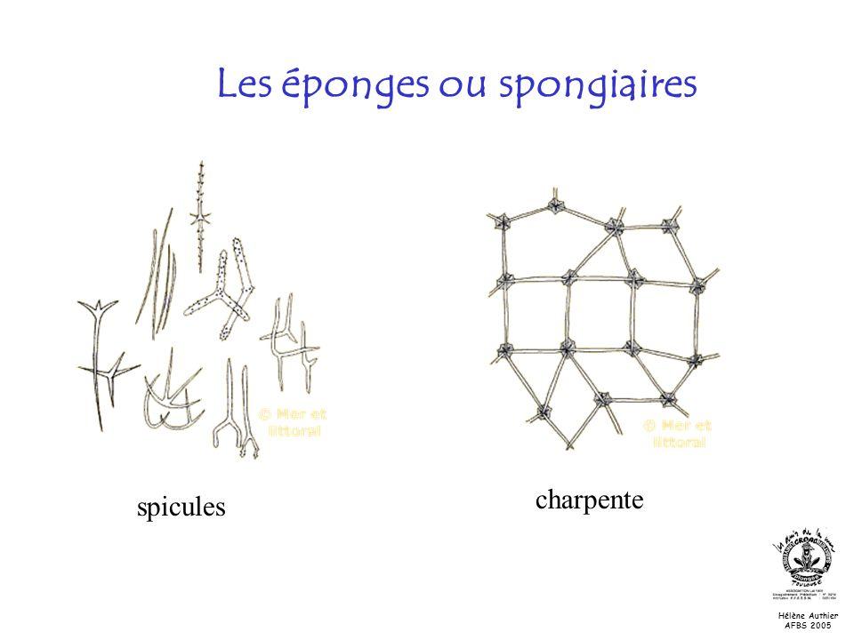Les éponges ou spongiaires