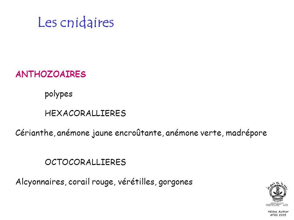 Les cnidaires ANTHOZOAIRES polypes HEXACORALLIERES