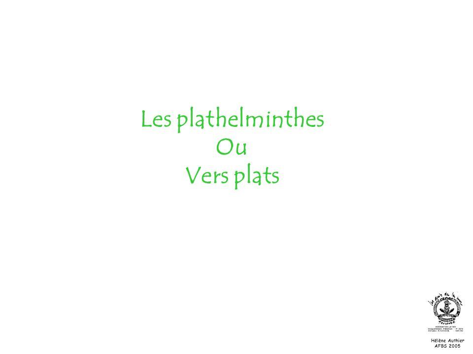 Les plathelminthes Ou Vers plats
