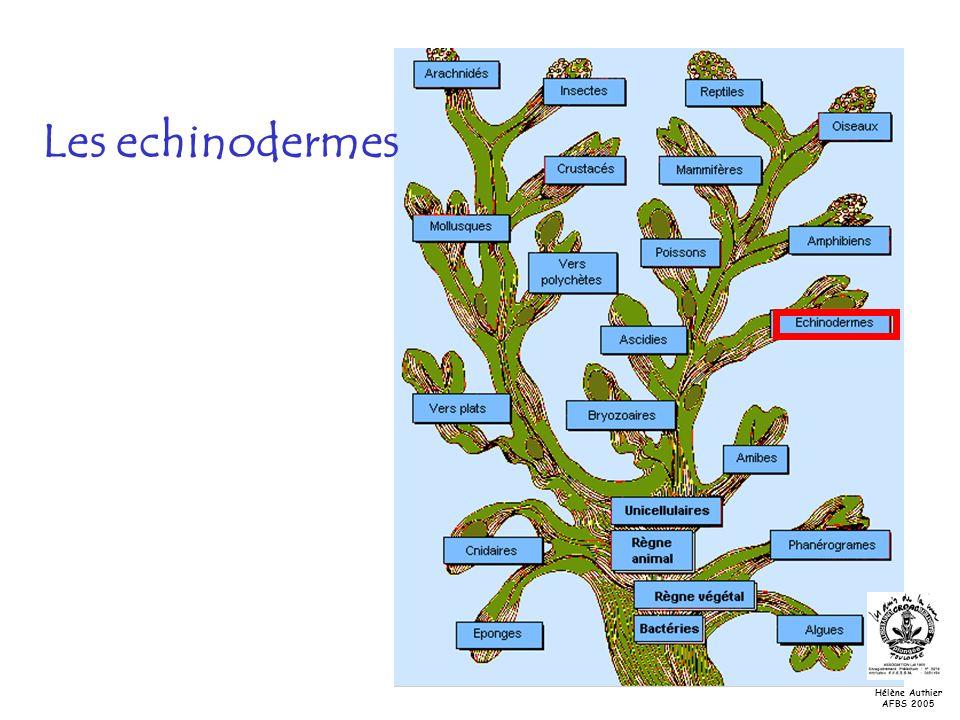 Les echinodermes