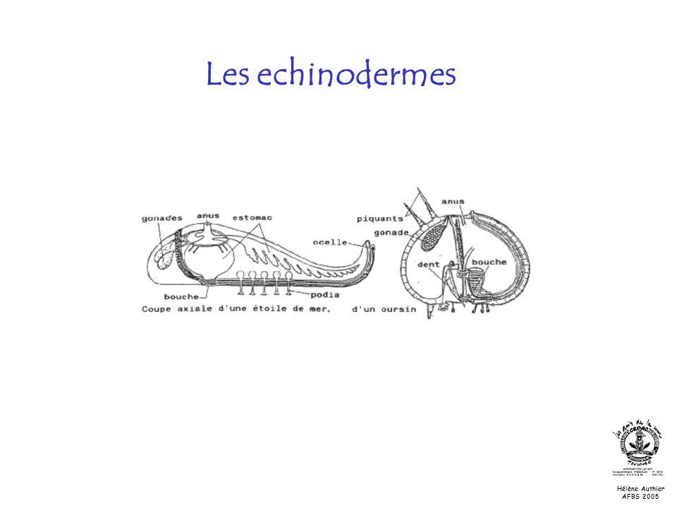 Les echinodermes Nutrition et milieu de vie