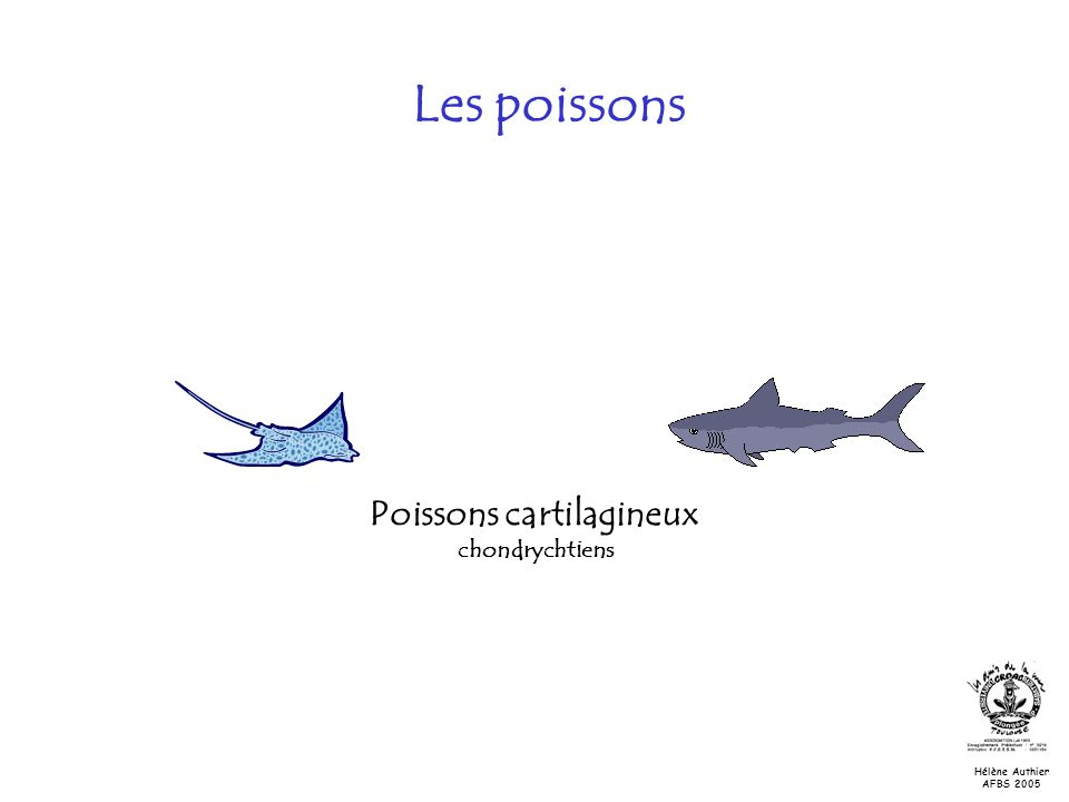 Poissons cartilagineux