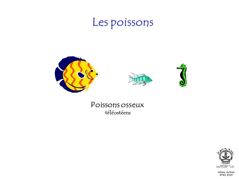 Les poissons Poissons osseux téléostéens Classe des ostéichtyens