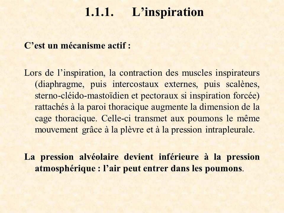 1.1.1. L'inspiration C'est un mécanisme actif :