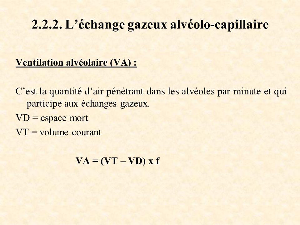 2.2.2. L'échange gazeux alvéolo-capillaire