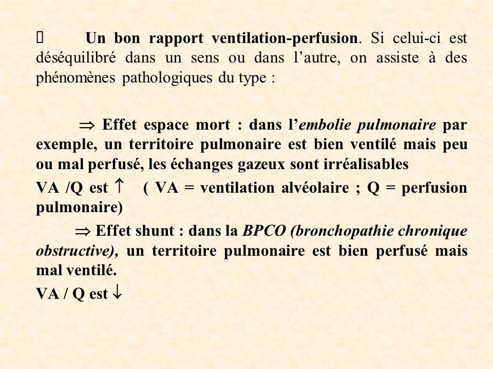 Ø Un bon rapport ventilation-perfusion