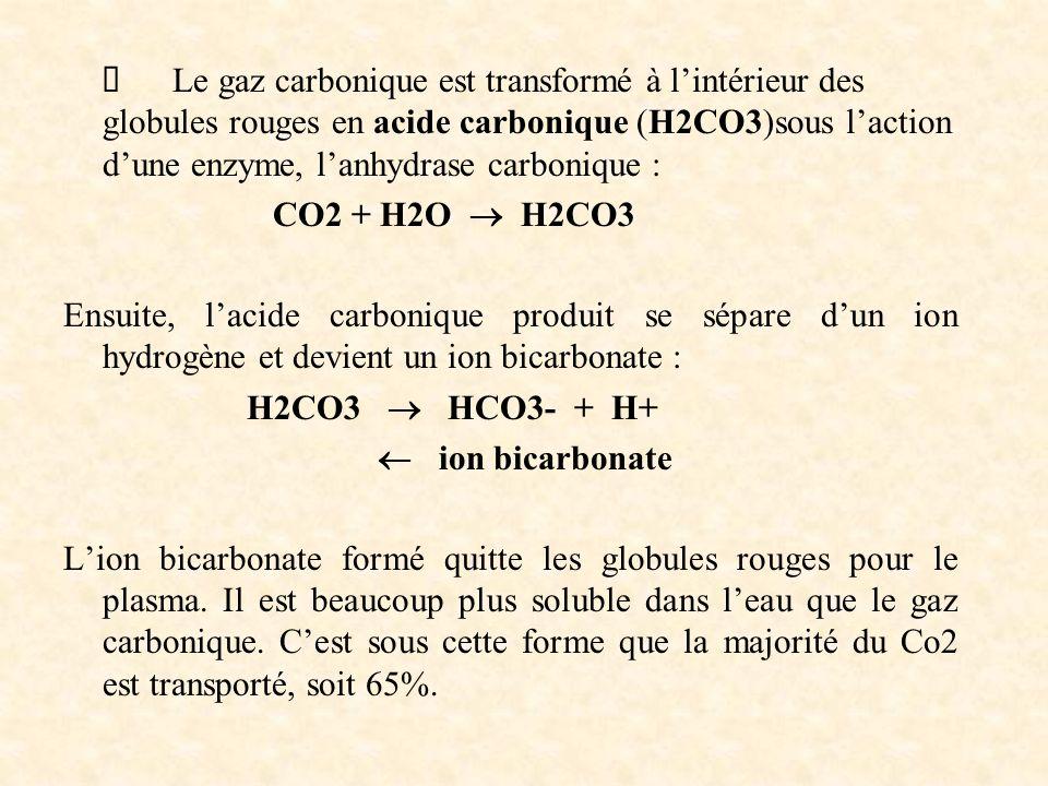 Ø Le gaz carbonique est transformé à l'intérieur des globules rouges en acide carbonique (H2CO3)sous l'action d'une enzyme, l'anhydrase carbonique :