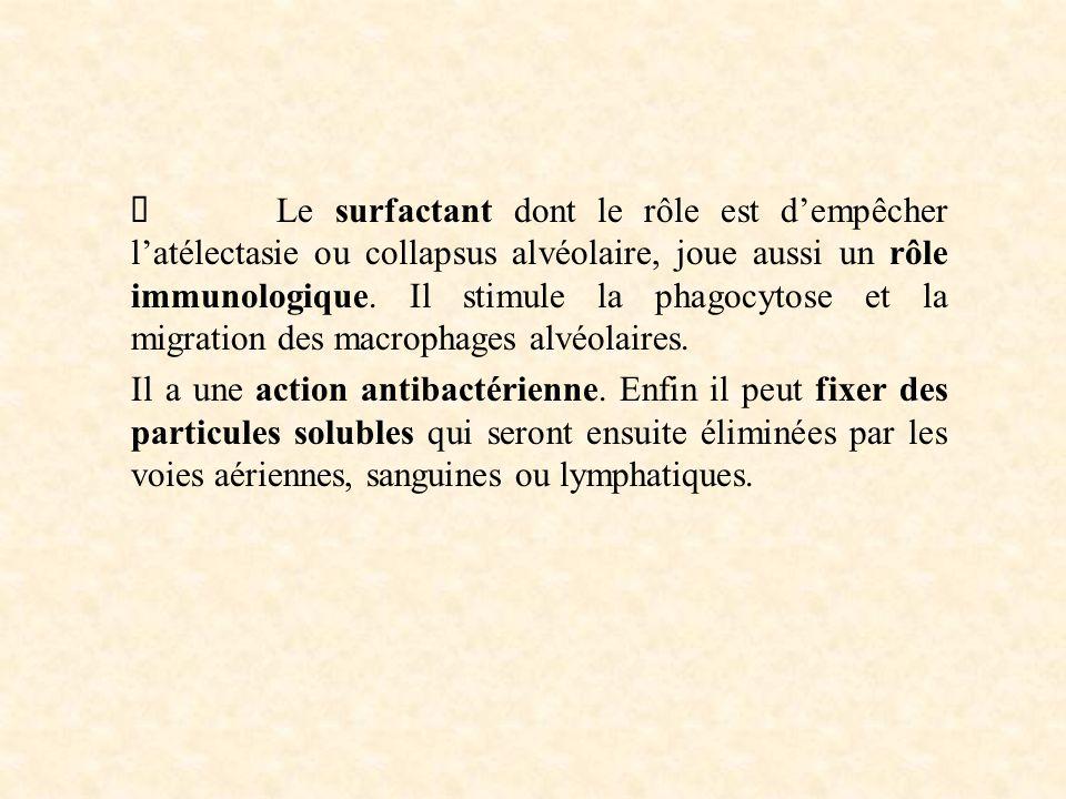 Ø Le surfactant dont le rôle est d'empêcher l'atélectasie ou collapsus alvéolaire, joue aussi un rôle immunologique. Il stimule la phagocytose et la migration des macrophages alvéolaires.