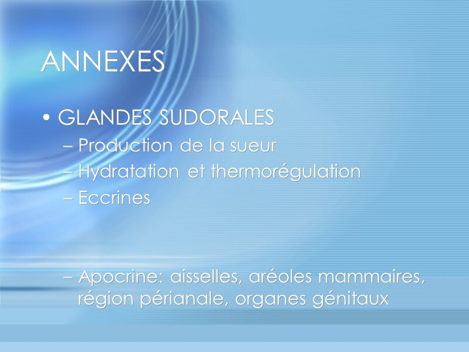 ANNEXES GLANDES SUDORALES Production de la sueur