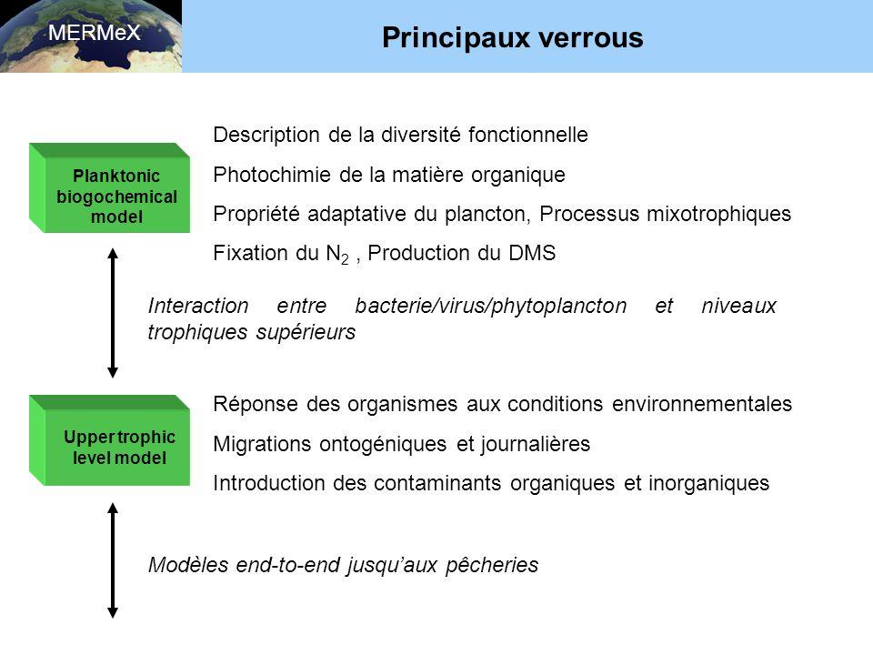 Planktonic biogochemical model