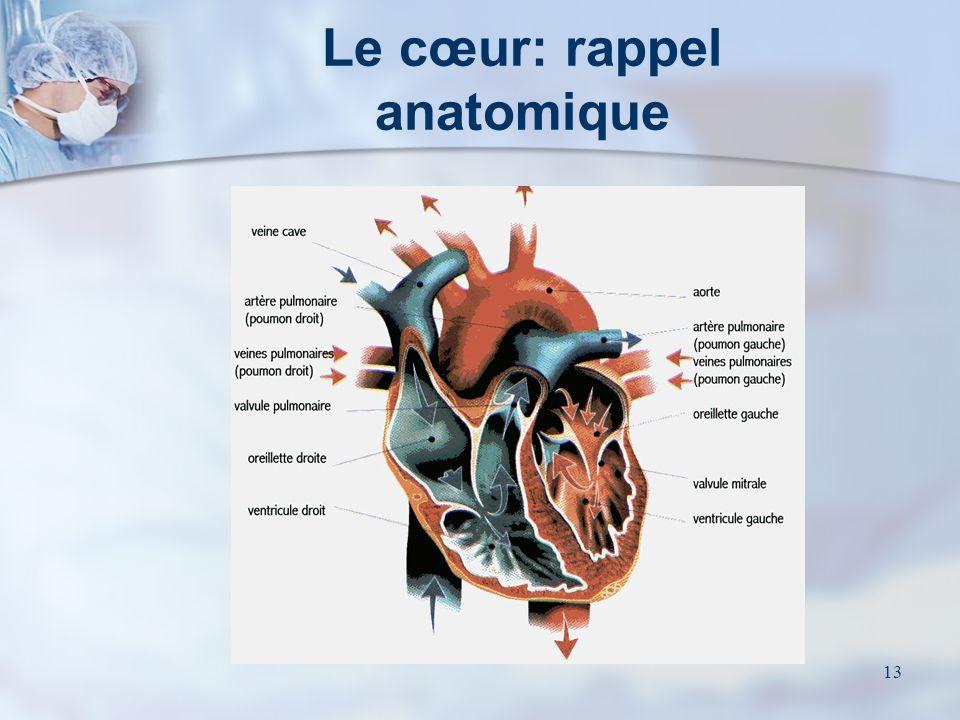 Le cœur: rappel anatomique