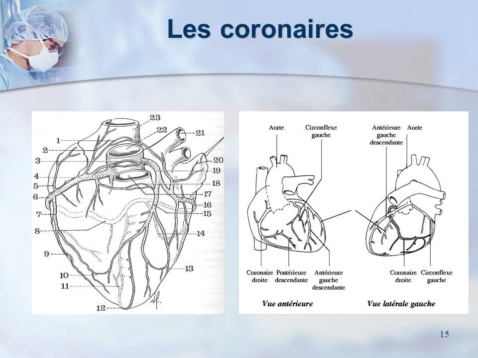 Les coronaires
