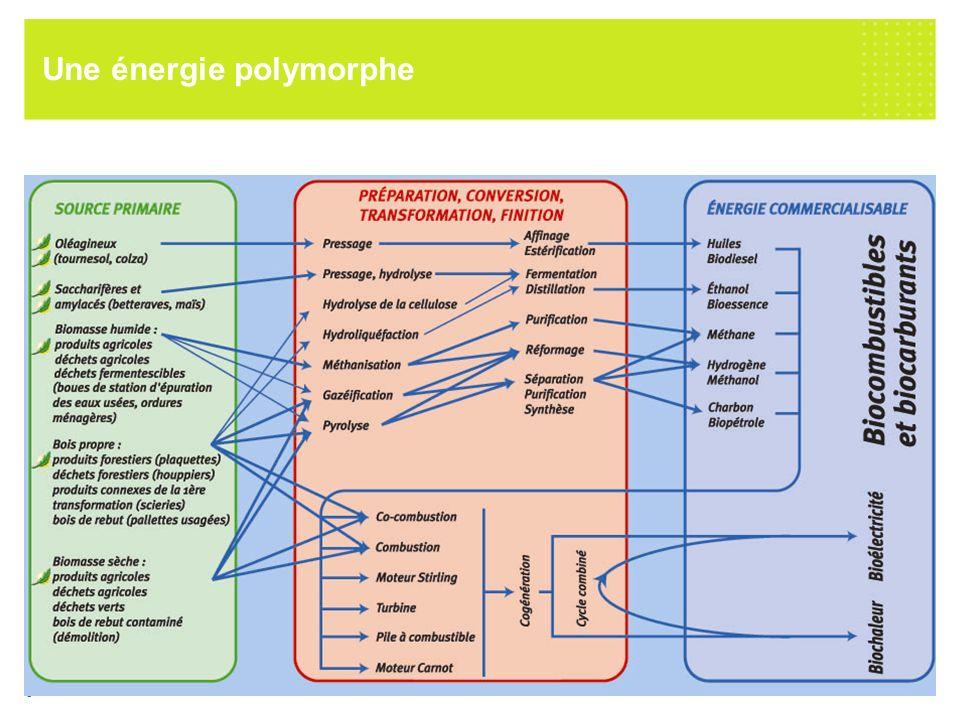 Une énergie polymorphe