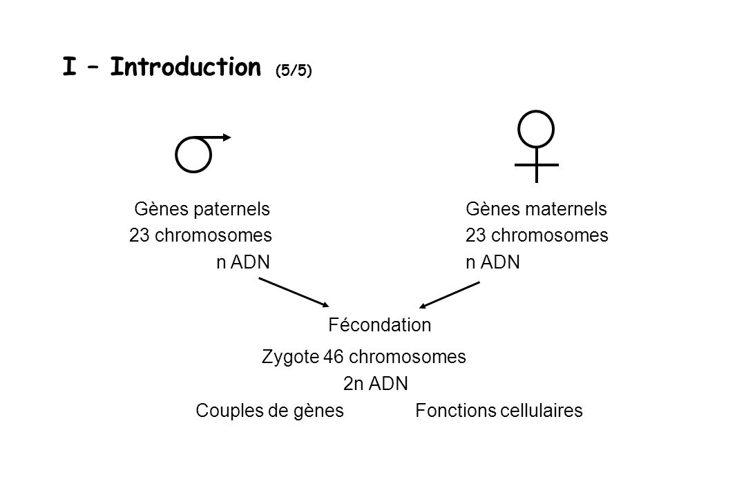 I – Introduction (5/5) Fécondation Zygote 46 chromosomes