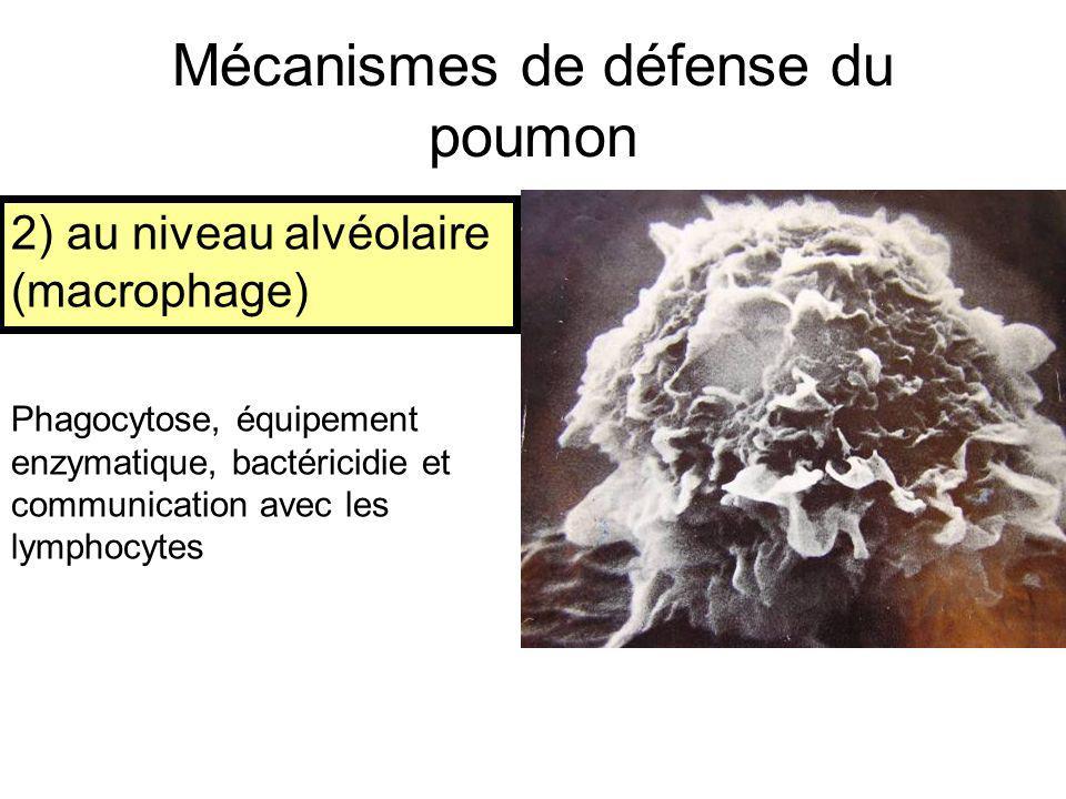 Mécanismes de défense du poumon