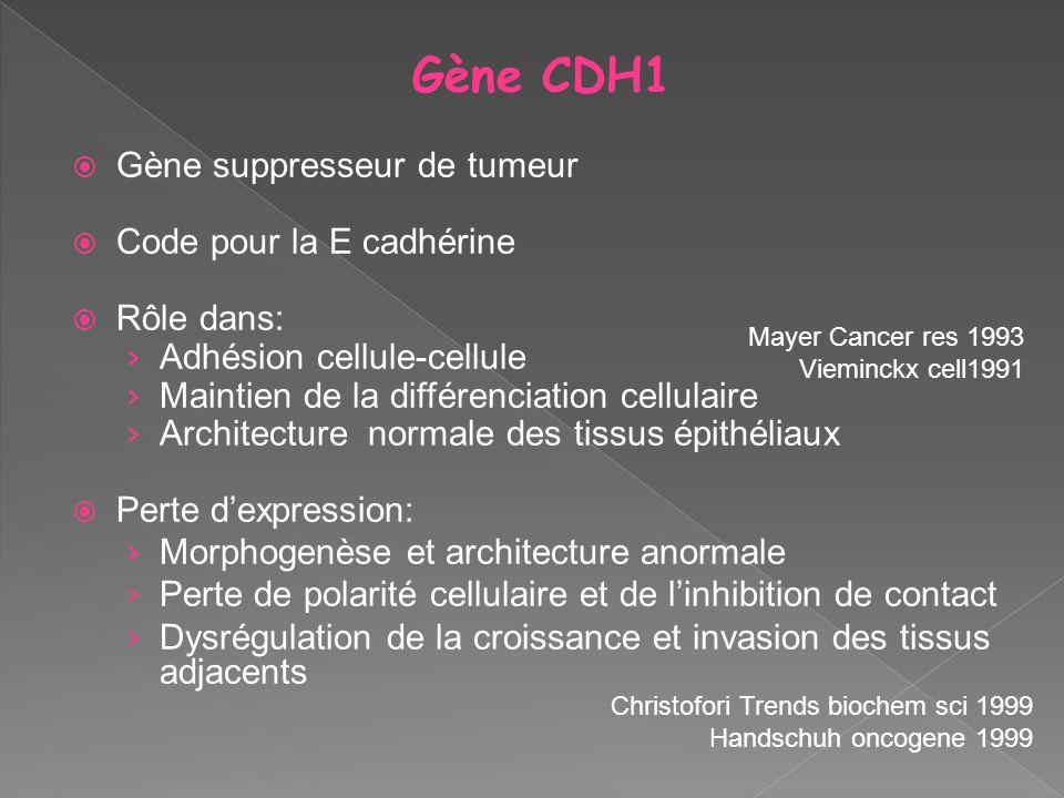 Gène CDH1 Gène suppresseur de tumeur Code pour la E cadhérine