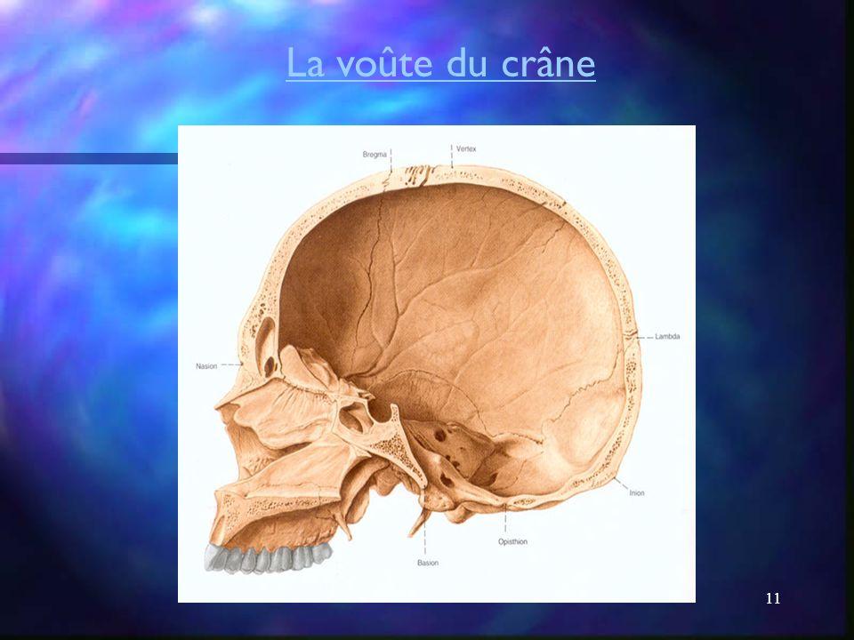 La voûte du crâne