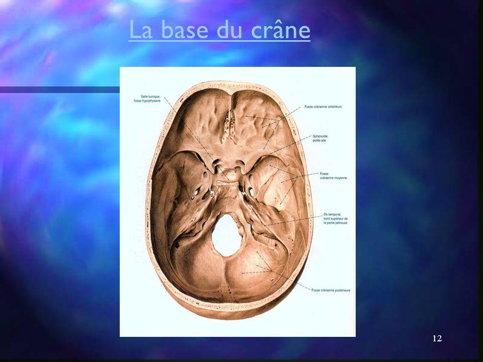 La base du crâne