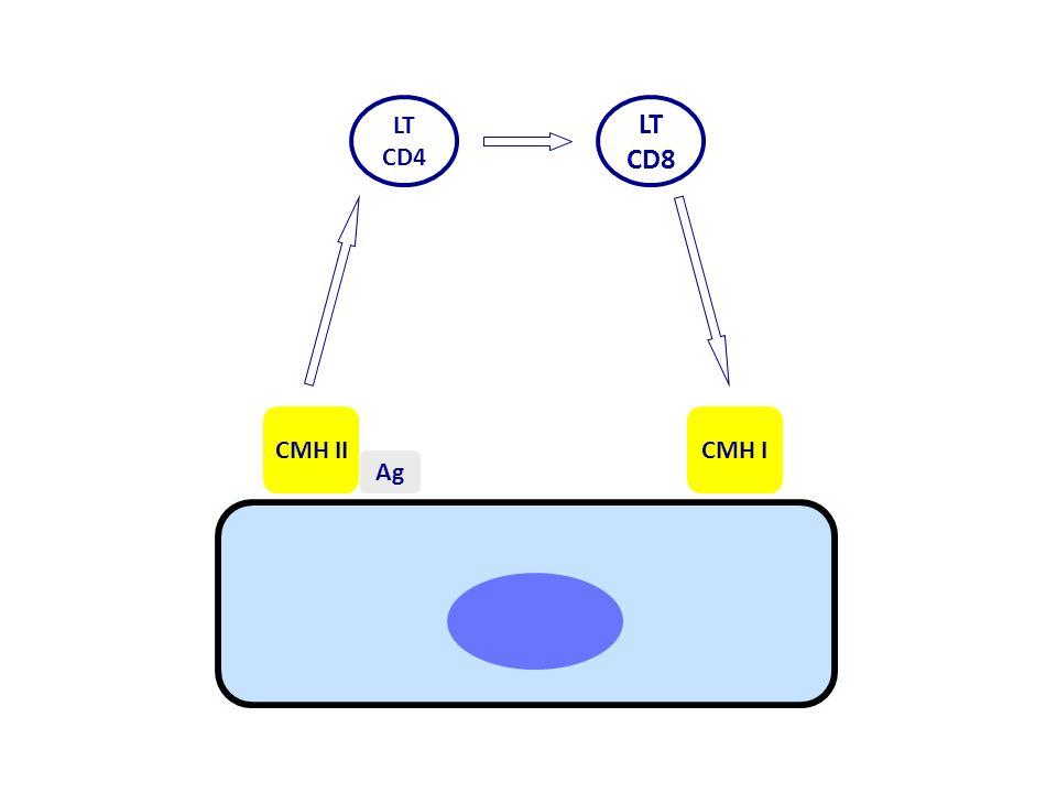 LT CD4 LT CD8 CMH II Ag CMH I