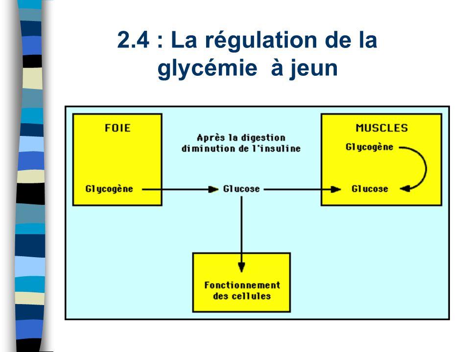2.4 : La régulation de la glycémie à jeun