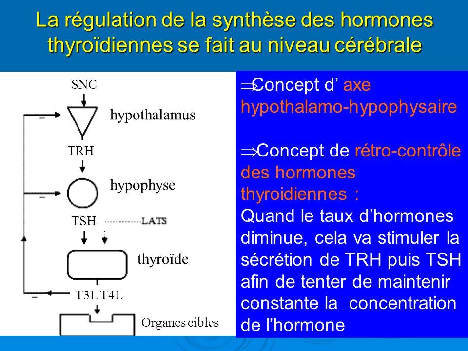 La régulation de la synthèse des hormones thyroïdiennes se fait au niveau cérébrale