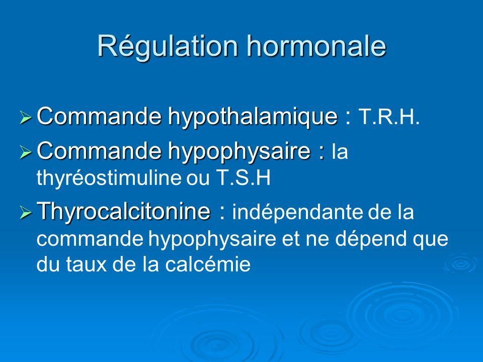 Régulation hormonale Commande hypothalamique : T.R.H.