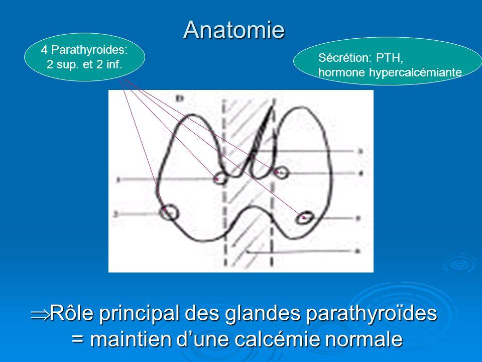 Anatomie 4 Parathyroides: 2 sup. et 2 inf. Sécrétion: PTH, hormone hypercalcémiante.