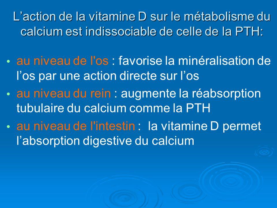 L'action de la vitamine D sur le métabolisme du calcium est indissociable de celle de la PTH: