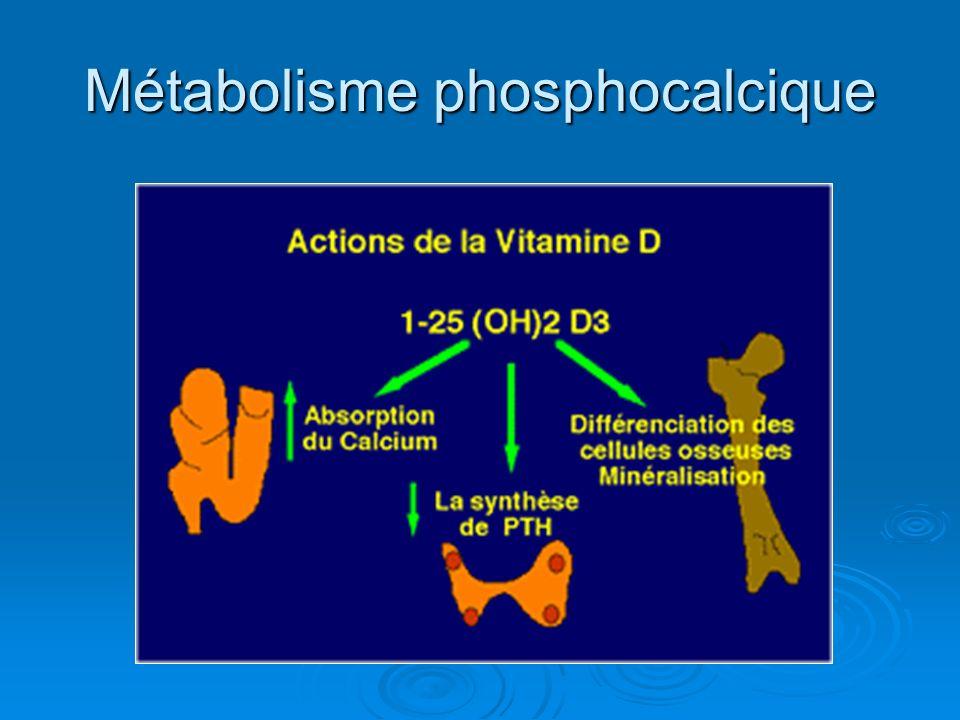 Métabolisme phosphocalcique
