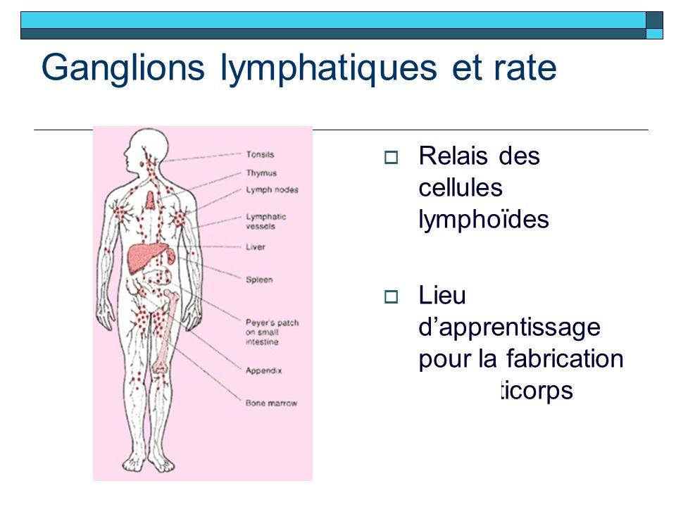 Ganglions lymphatiques et rate