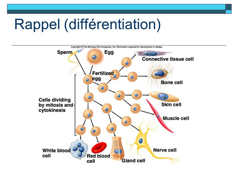 Rappel (différentiation)