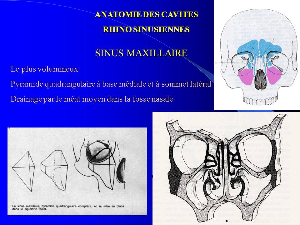 SINUS MAXILLAIRE ANATOMIE DES CAVITES RHINO SINUSIENNES