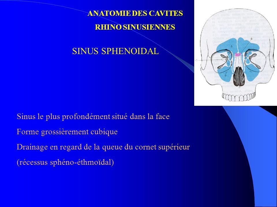 SINUS SPHENOIDAL Sinus le plus profondément situé dans la face