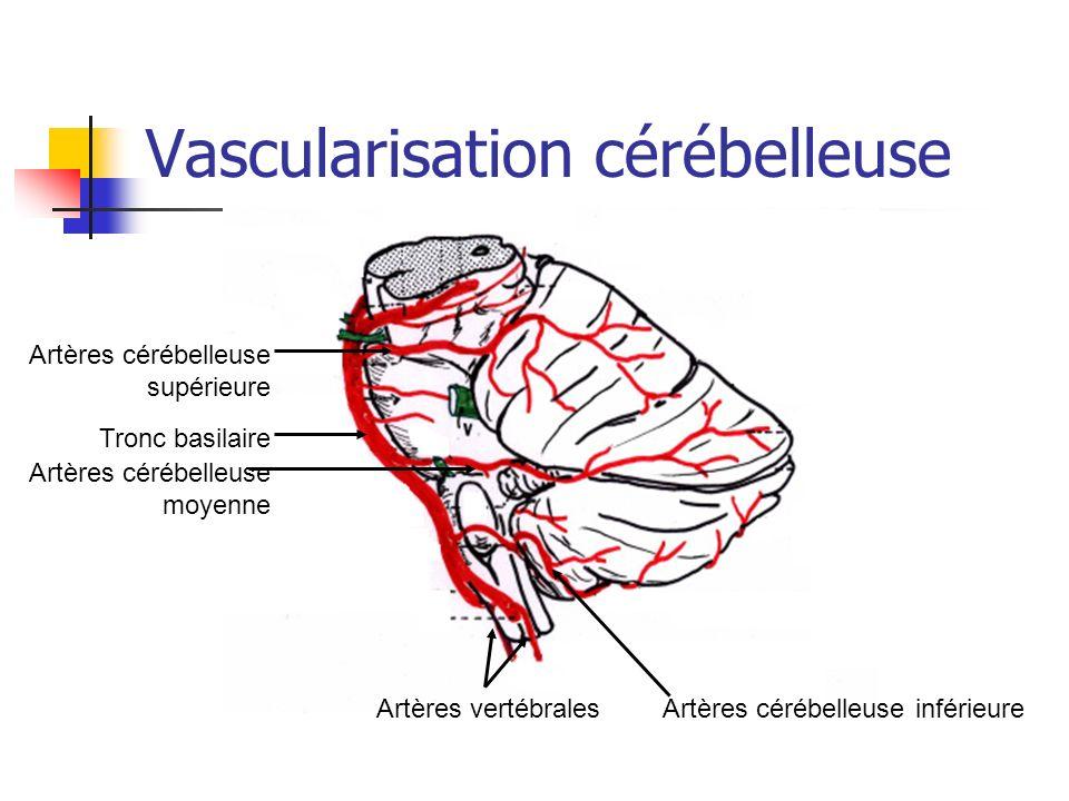 Vascularisation cérébelleuse