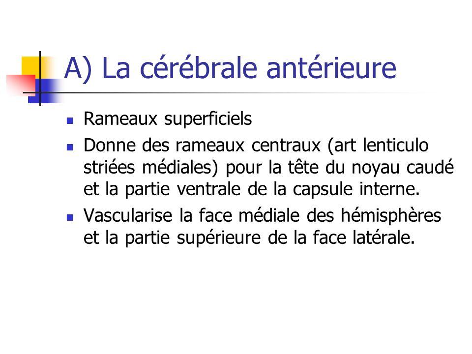 A) La cérébrale antérieure