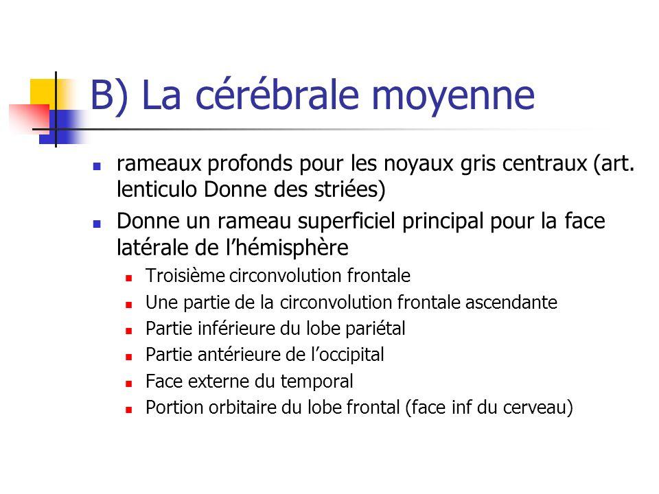 B) La cérébrale moyenne