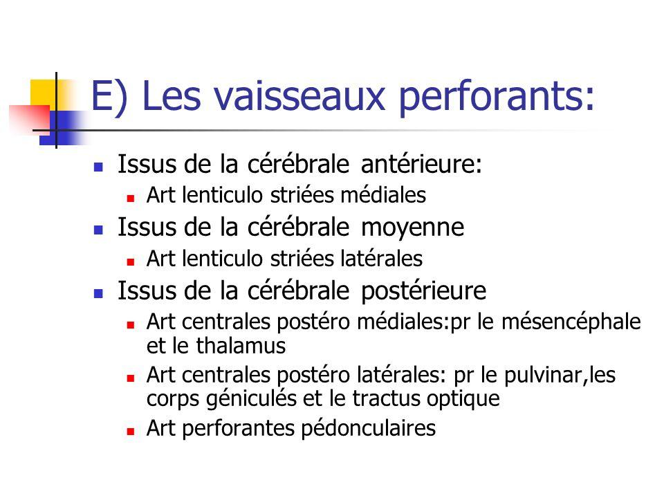 E) Les vaisseaux perforants: